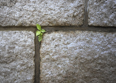 Trees sprout push through on wall.           Stock Photo