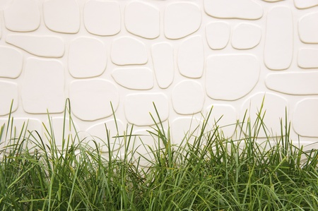 Grass in front of a white wall background.        photo