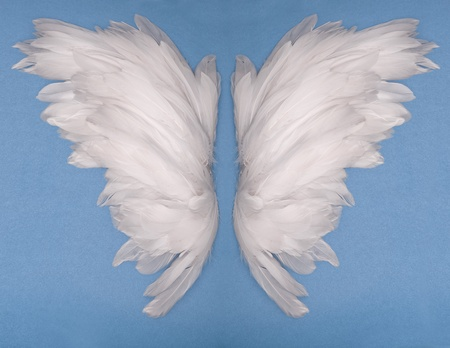 wings feather on blue background  photo