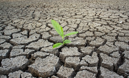 cracked earth: Green plant growing from cracked earth. New life.  Stock Photo