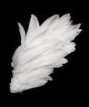 Angel wings on dark background photo