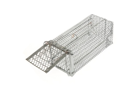 A Mouse trap on white background  photo
