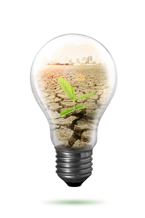 bulb eco friendly concept   photo