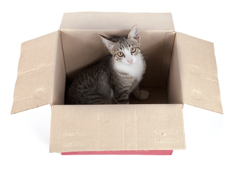 young cat in box on white  photo
