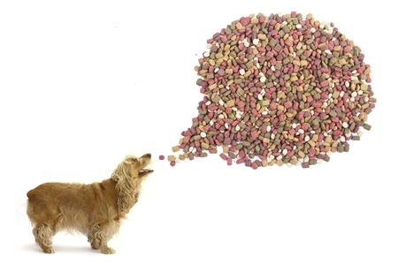 dog food bubble shape, on white background.  photo