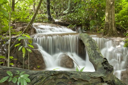 rainforest background: Waterfall on tropical asia forest.