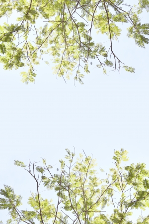 A frame leaves tree background
