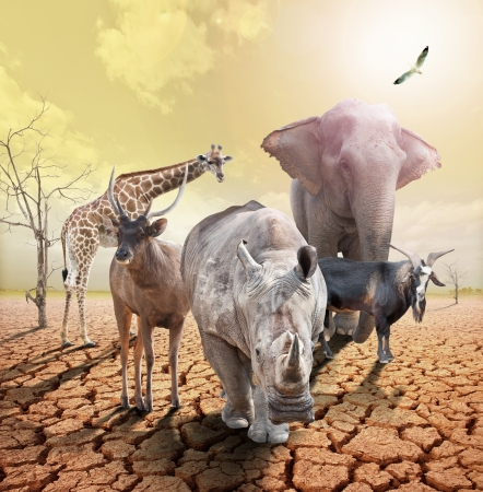 animals concept image of global warming.   photo