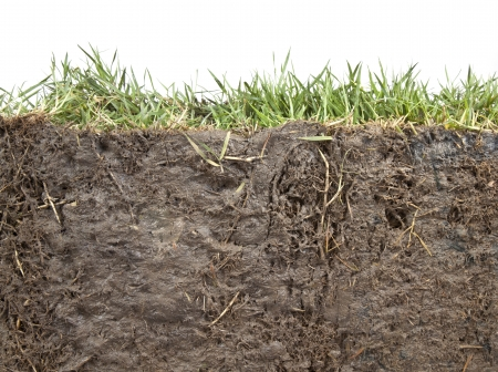 under ground: cross section of grass and soil against white background
