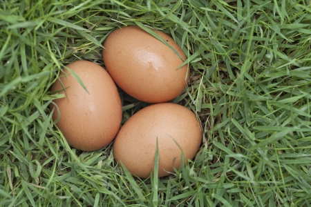 3 eggs on green grass  Stock Photo - 19370560