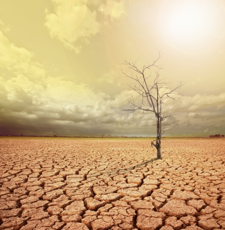 barren: concept image of global warming