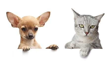 Dog and Cat above white banner on white Stock Photo - 19584641
