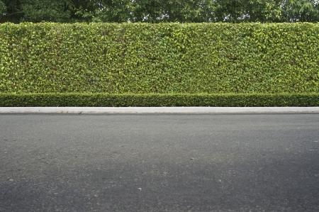 Roadside uitzicht en groen gras achtergrond