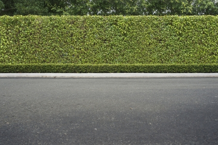 hedges: Roadside view and green grass background