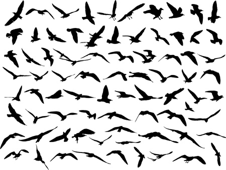 seagull silhouette on white background   Illustration