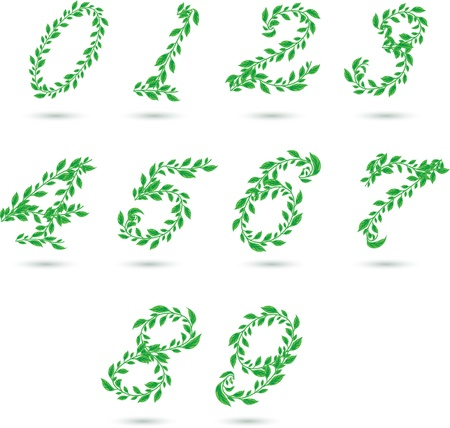 Vector set illustration a leaves number on white  Vector