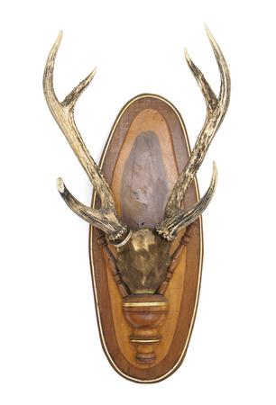 black buck: Deer head isolated on white  Stock Photo