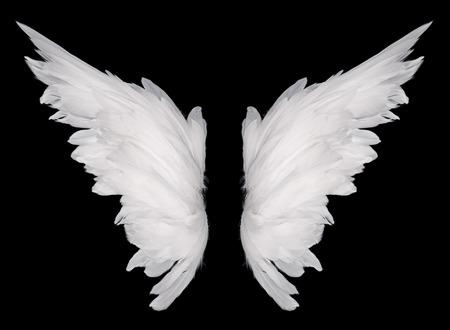 pluma blanca: ala blanco sobre fondo oscuro Foto de archivo
