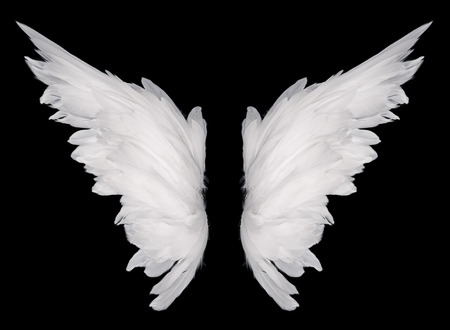 wing: white wing isolated  on dark background  Stock Photo
