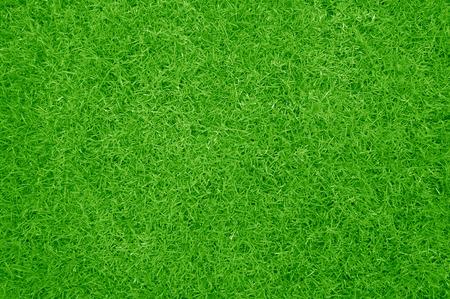 a Green grass fresh background