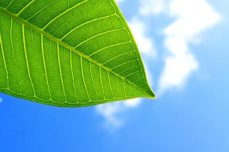 leaf green on blue sky