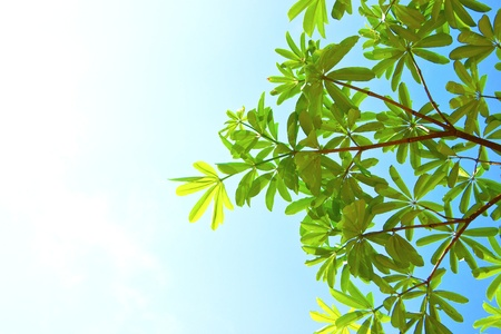 Green leaf on sky texture background Stock Photo