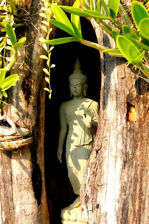A buddha statue inside a tree hollow in Thailand.