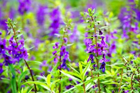 violet flower field background