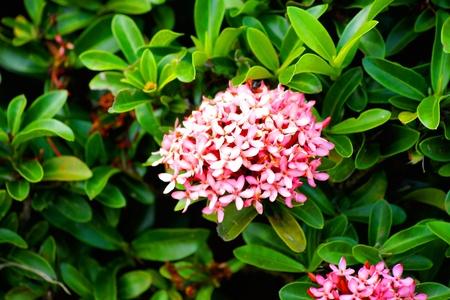 Flowers in garden thailand
