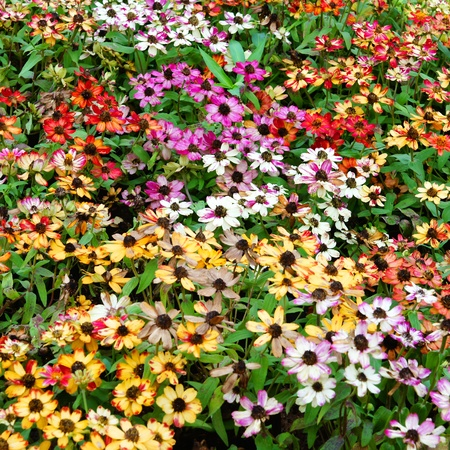 Background from garden flowers