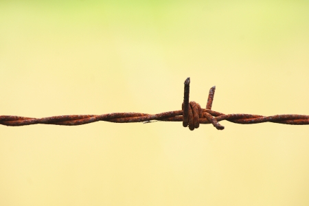 Barb Wire photo