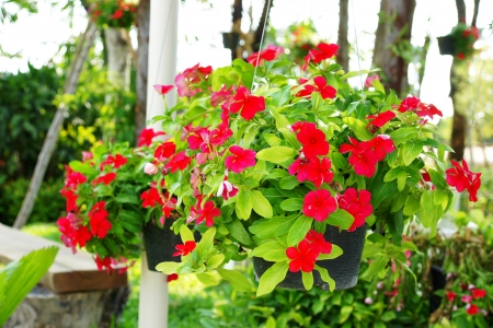 Hanging Flower Basket photo