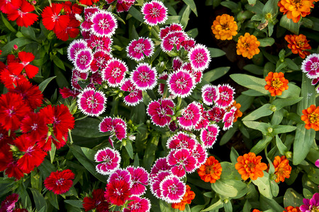 red and pink coloful flower