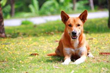 dog on garden Stock Photo