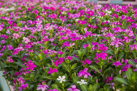 coloful flower