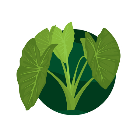 Vector illustration of taro leaves. Taro green leaves illustration