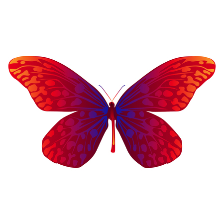 Animal clip art illustration. Insect illustration. Beautiful butterfly in vector art design