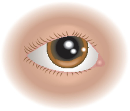 Body parts eye. An illustration of a human eye, no meshes used
