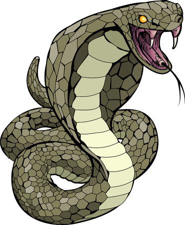 A Cobra snake about to strike illustration