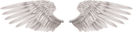 Illustration of a pair of outstretched beautiful white wings