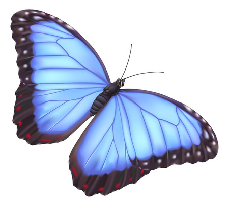 Abbildung von einem schönen blue-Morpho-Schmetterling