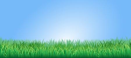 맑고 푸른 하늘 아래 녹색 잔디 필드 나 잔디 스톡 콘텐츠 - 12030893