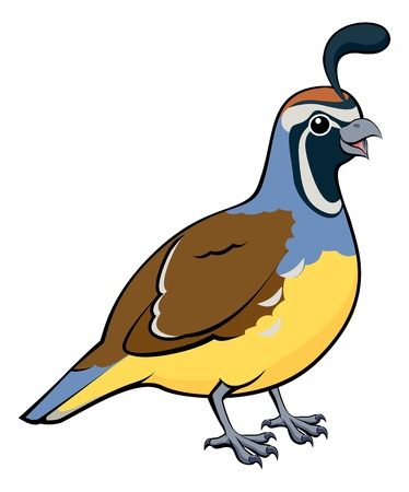 Cartoon illustration of a male California Quail or California Valley Quail or Valley Quail  Callipepla californica