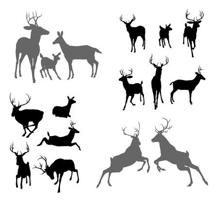 Un conjunto de siluetas de ciervos incluyendo cervatillo, dólares Gama y ciervos en varias poses. También un grupo familiar pose y dos ciervos luchando Ilustración de vector