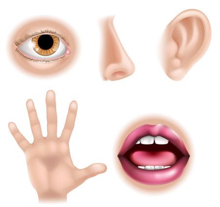 Cinq sens illustrations avec la main pour le toucher, les yeux pour la vue, le nez pour sentir, l'oreille de l'audience et la bouche pour le goût