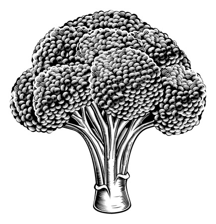 A vintage retro woodcut print or etching style broccoli illustration Ilustração