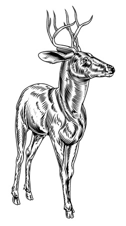 A vintage style woodcut deer illustration of a buck or stag proudly standing and looking into the distance