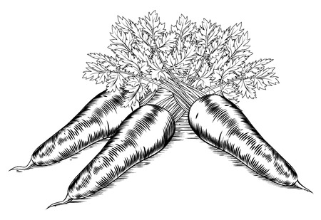 A vintage retro woodcut print or etching style carrots illustration
