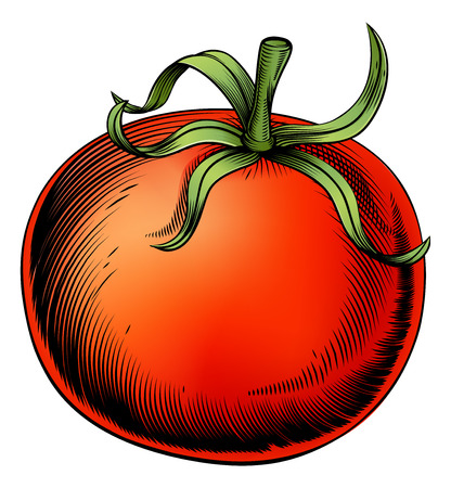 A tomato vintage woodcut illustration in a vintage style