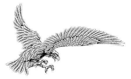 Original eagle illustration of an eagle swooping in for the kill in a vintage style